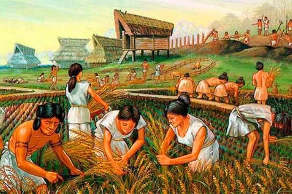 ¿Qué innovaciones se realizaron en la agricultura?