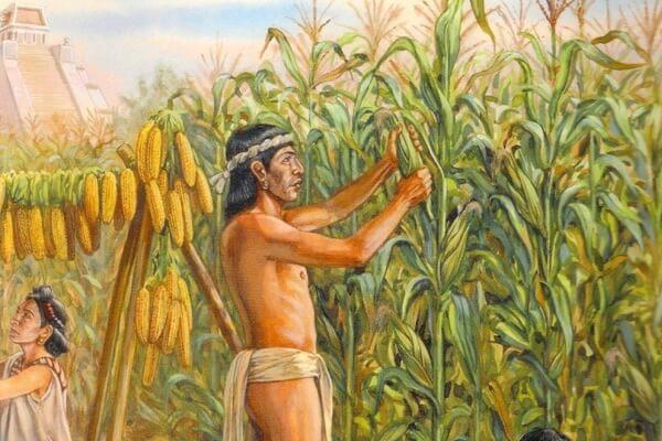 Historia de la agricultura en México