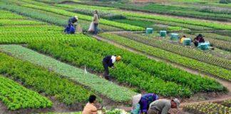 origen e historia de la agricultura