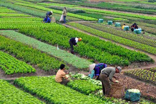 origen de la agricultura