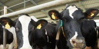 Origen de la ganadería