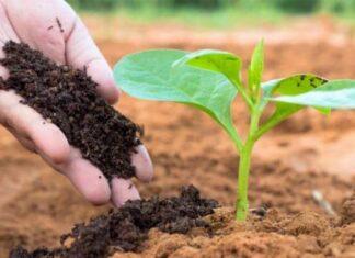historia de los abonos y fertilizantes