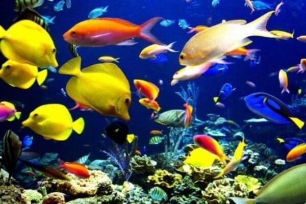 origen e Historia del acuario