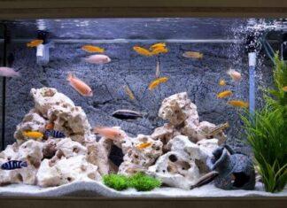 Origen del acuario de peces