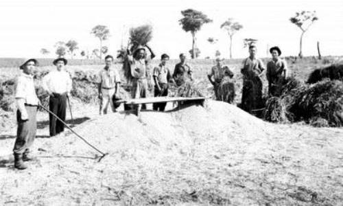 origen del arroz en latinoamérica
