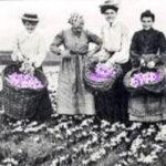 historia del azafrán en la gastronomia