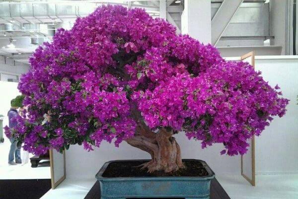 origen del bonsai
