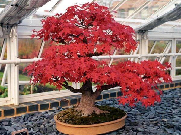 origen del bonsai japón
