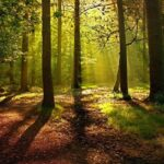 Historia del bosque en España
