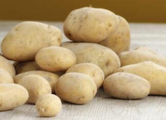 La historia de la patata o papa