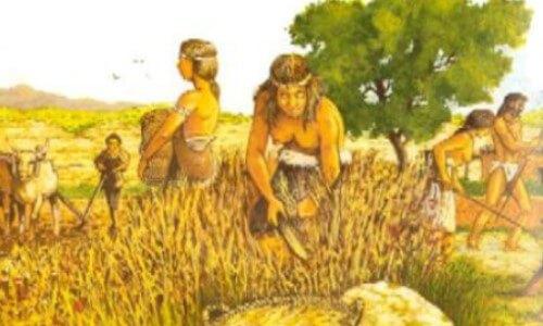 La historia del trigo y la civilización del hombre