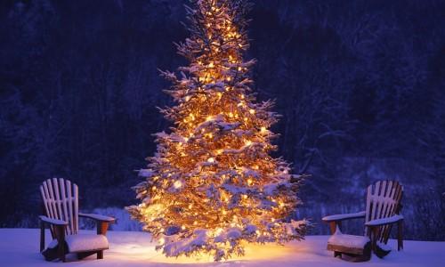 abeto árbol de Navidad