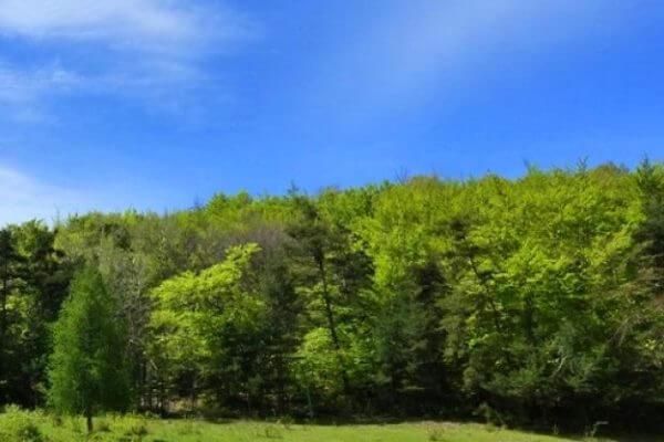 historia leyes protección bosque España