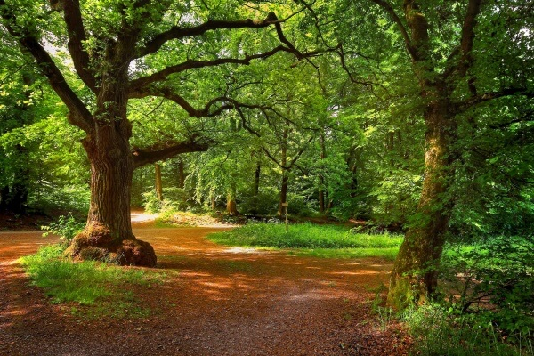 conservación del bosque español