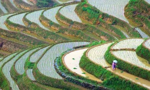 procedencia del arroz