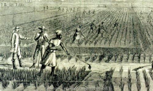 en qué país se descubrió el arroz