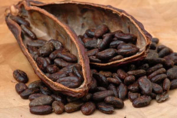 Origen y evolución del chocolate