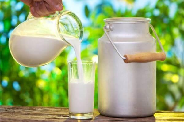 origen e historia de la leche