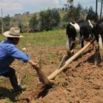 origen e historia del arado