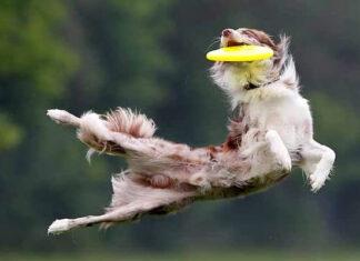 origen e historia del frisbee