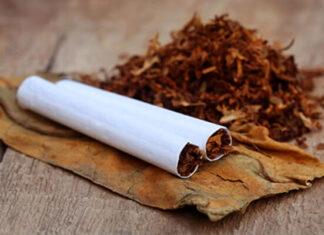 origen e historia del tabaco