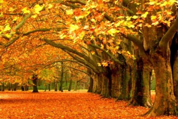 evolución bosque español