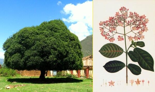 cuál es el origen de la quinina