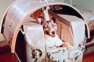 primer ser vivo puesto en órbita - Imagen de la perra Laka antes de ser lanzada al espacio