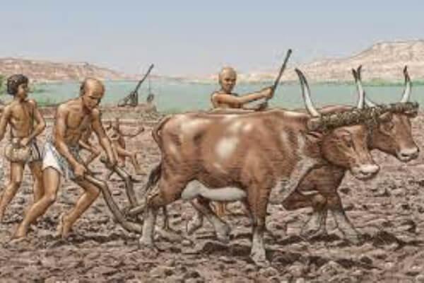 ¿Quién inventó el arado y en qué año?