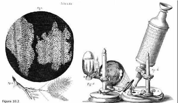¿Cuándo se inventó el microscopio de Leeuwenhoek?