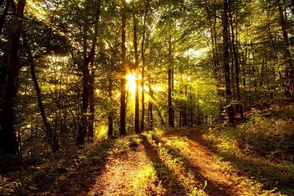 origen de los bosques de España